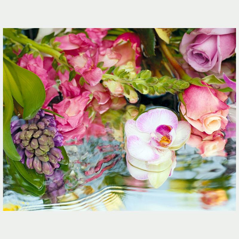 8747_50x70_09_dreamy_orchids_ekleinveld