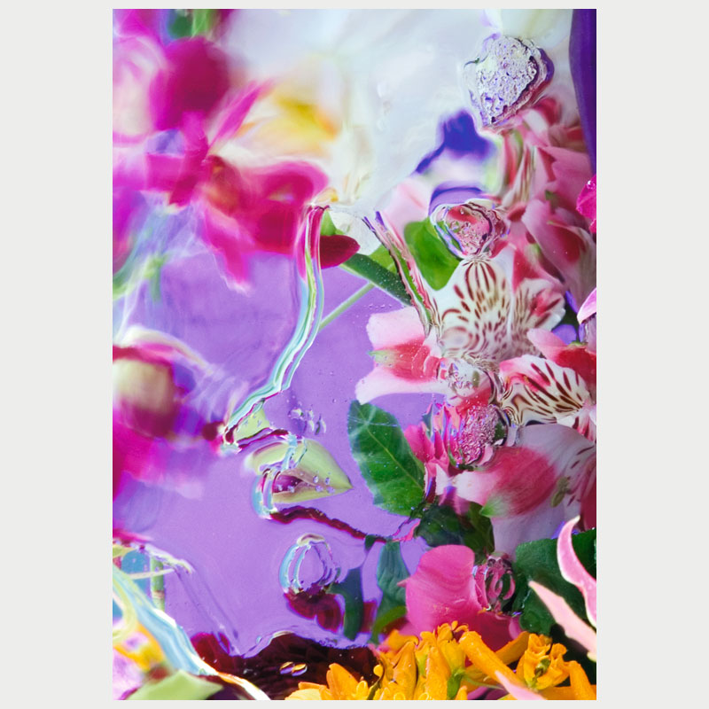 orchid_waltz_ii_ekleinveld