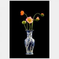 Tulip Mania VII