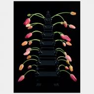 Tulip Mania XVIII