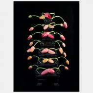 Tulip Mania XVII
