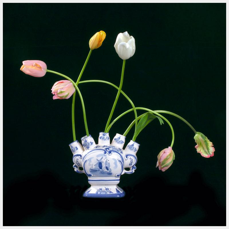 Tulip Mania II